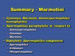 summary marmotini