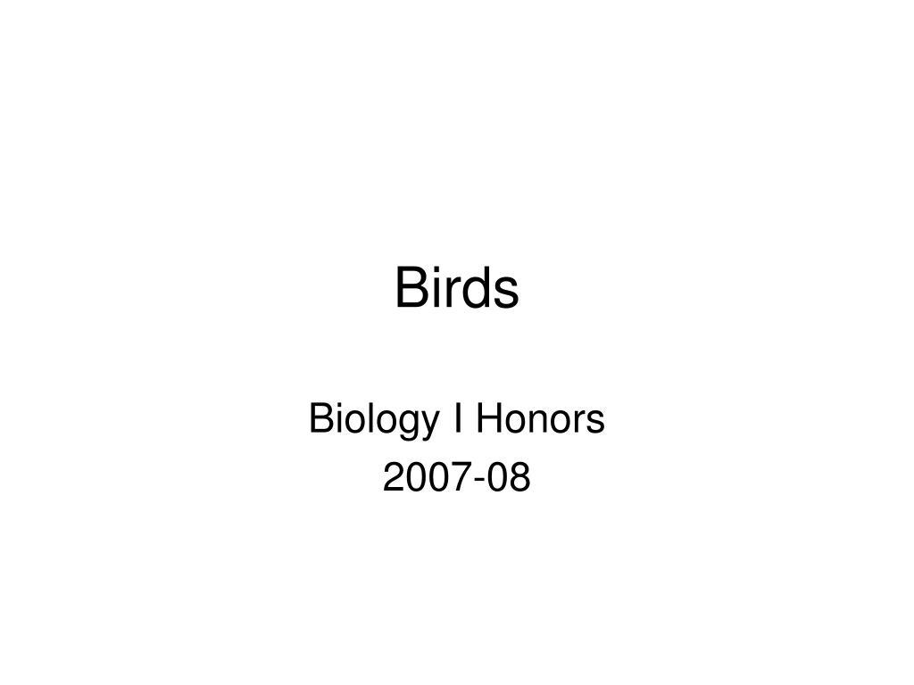 birds l.