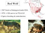 red wolf26