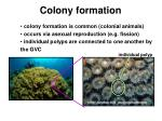 colony formation