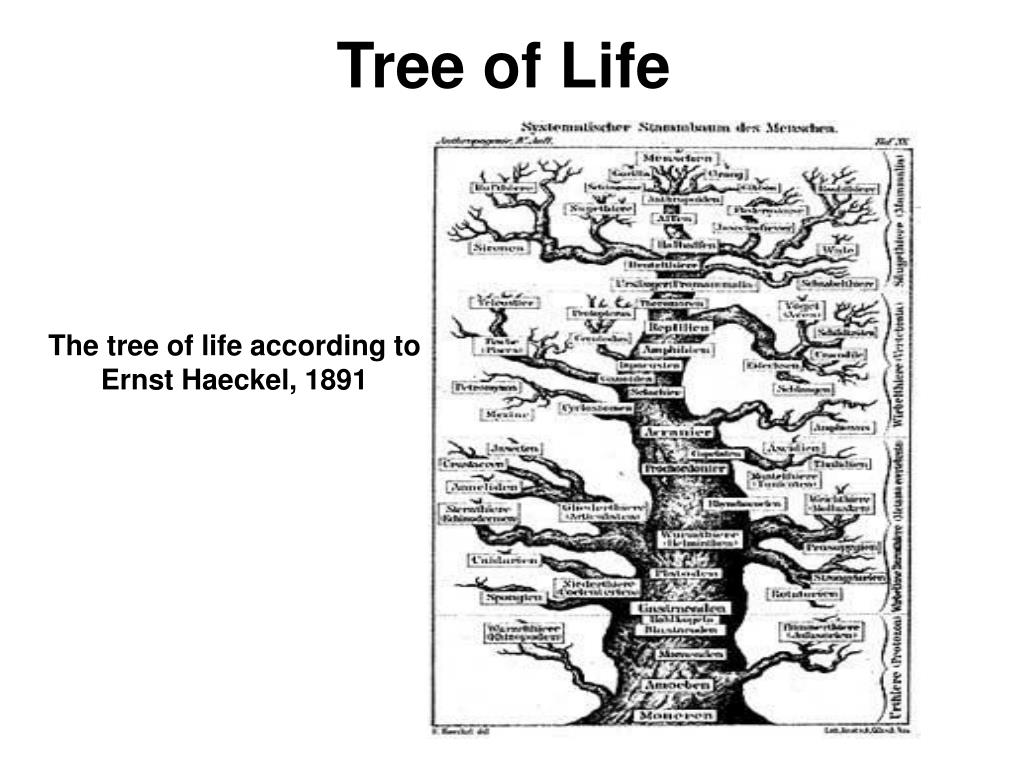 tree of life l.