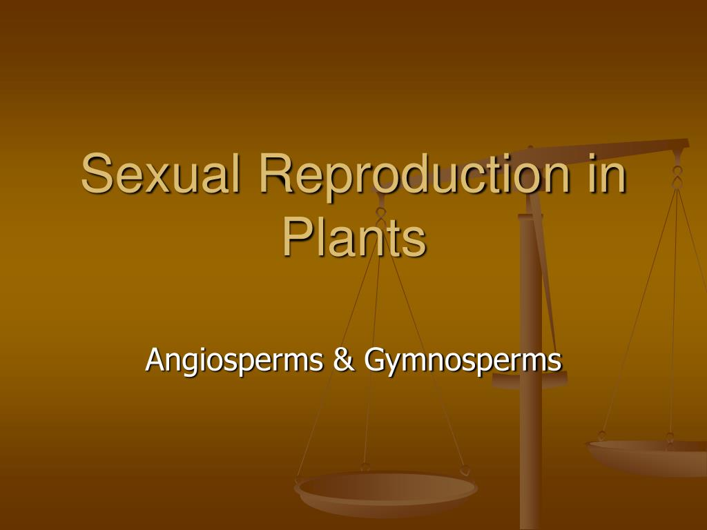 sexual reproduction in plants l.
