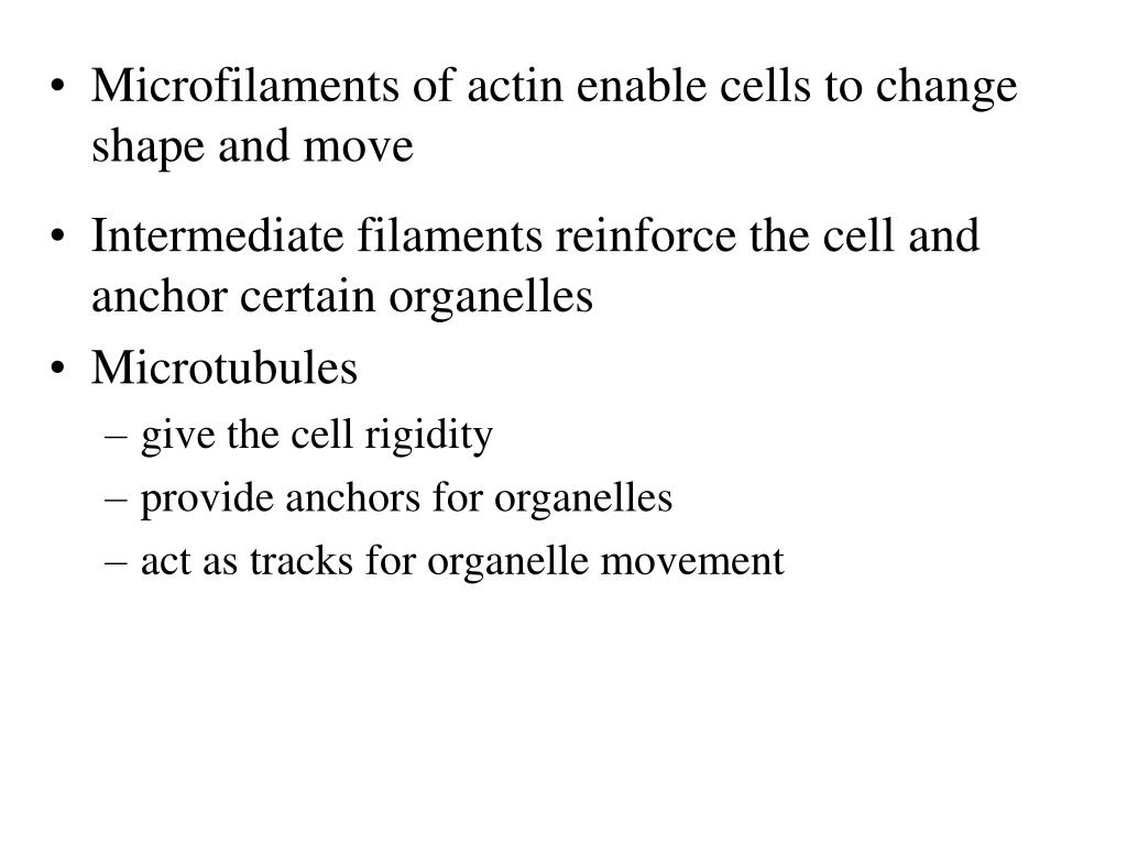 Intermediate filaments reinforce the cell and anchor certain organelles