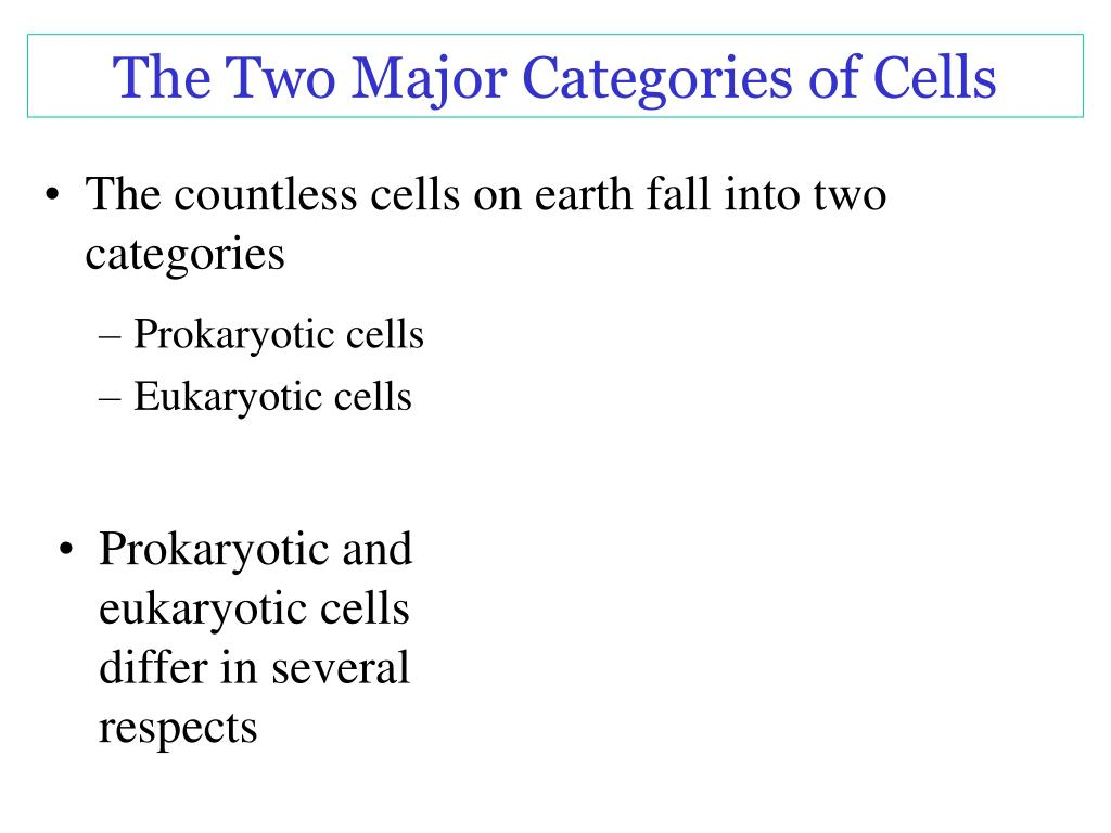 The Two Major Categories of Cells