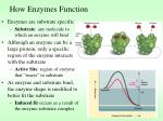 how enzymes function