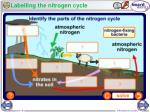 labelling the nitrogen cycle