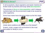 what is decay