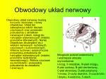 obwodowy uk ad nerwowy