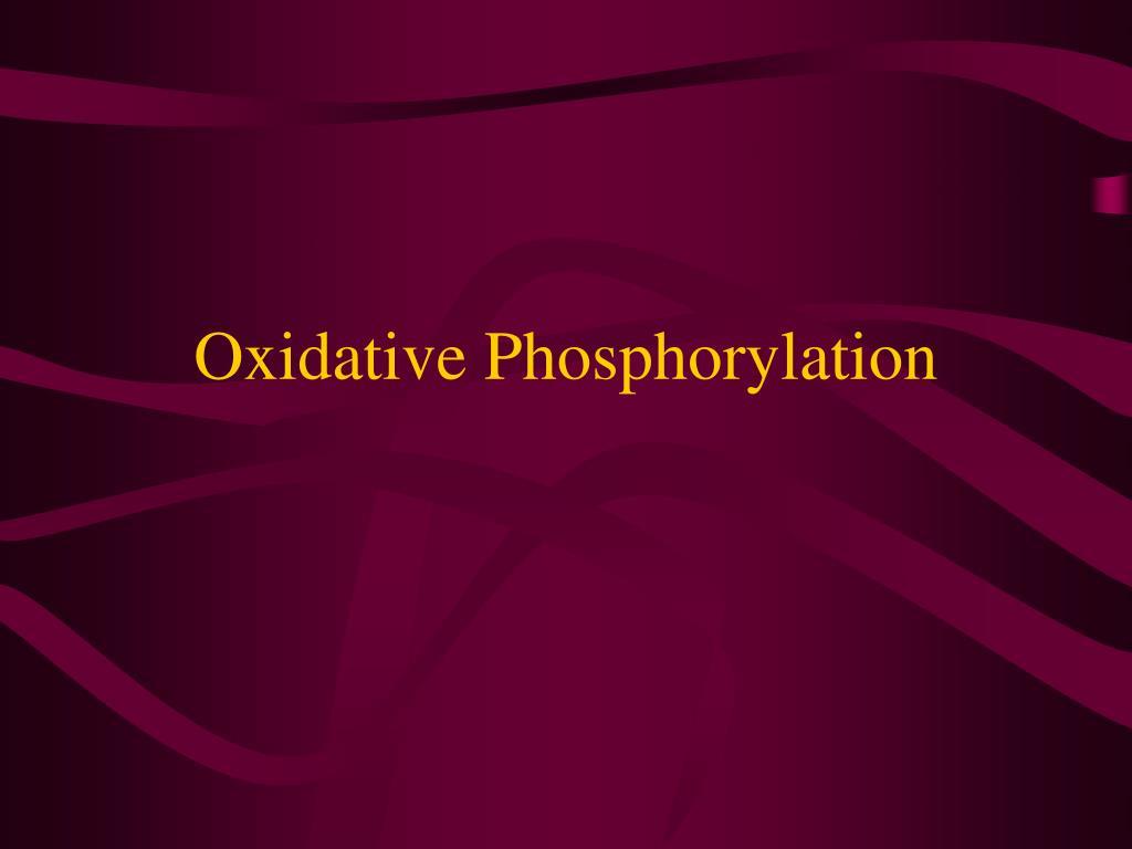 oxidative phosphorylation l.