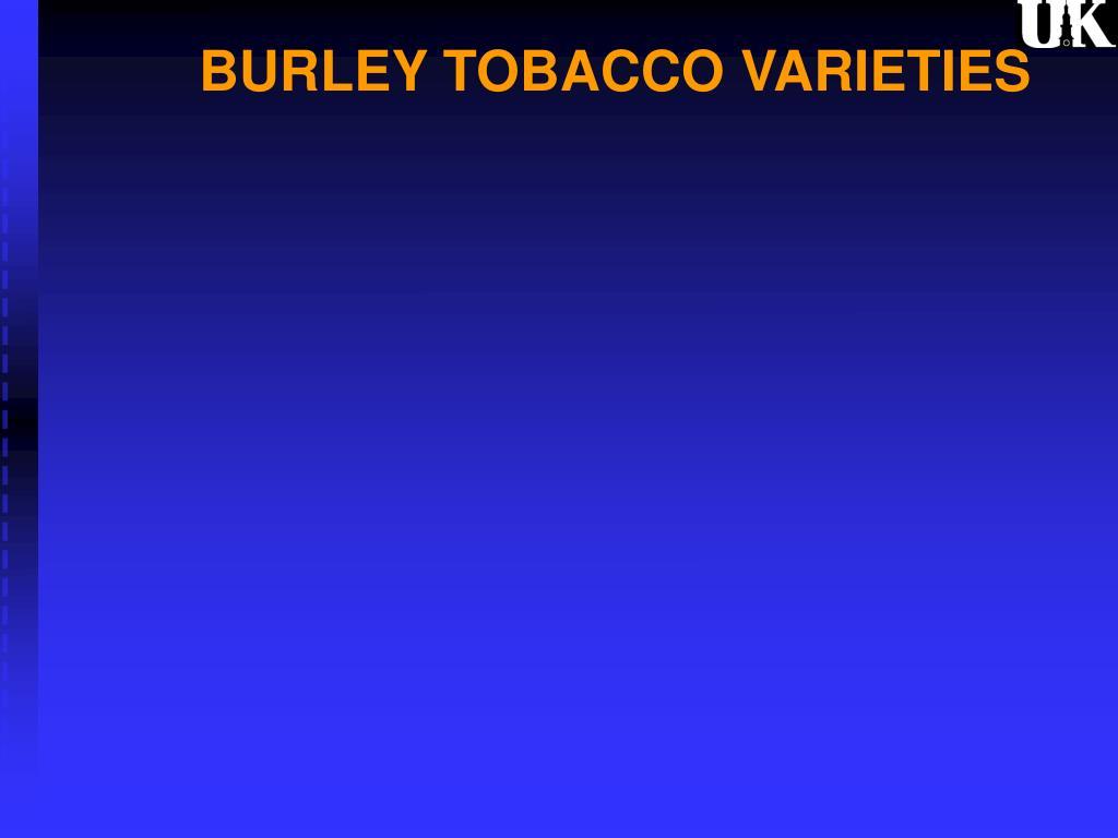 burley tobacco varieties l.