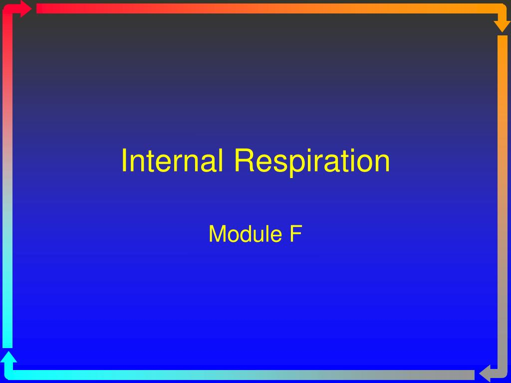 internal respiration l.