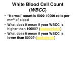 white blood cell count wbcc