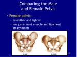 comparing the male and female pelvis