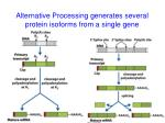 alternative processing generates several protein isoforms from a single gene