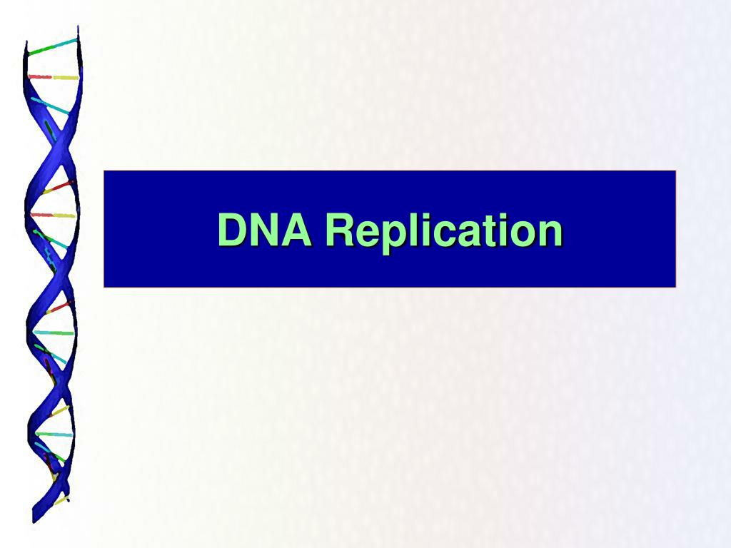 dna replication l.