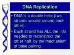 dna replication4