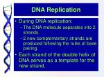 dna replication6