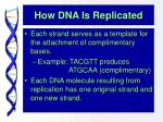 how dna is replicated8