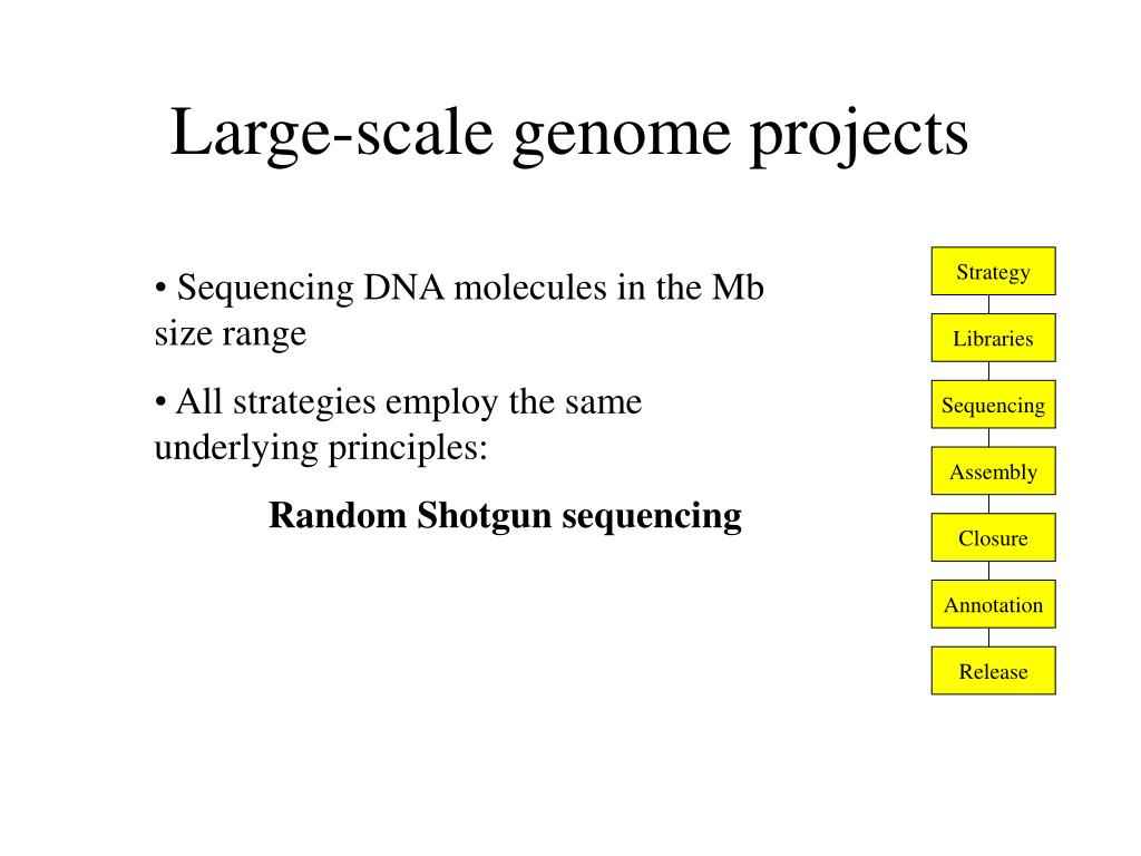 large scale genome projects l.