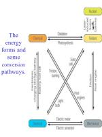 the energy forms and some conversion pathways