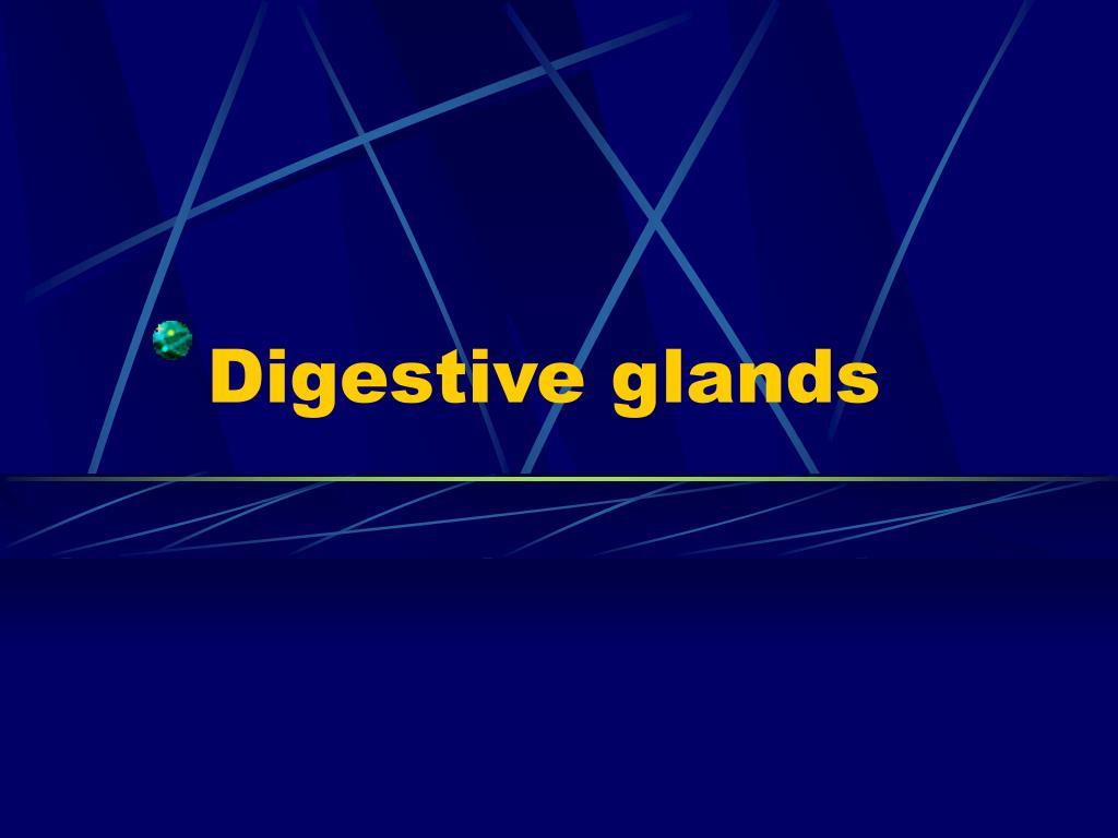 digestive glands l.