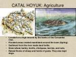catal hoyuk agriculture