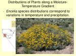distributions of plants along a moisture temperature gradient