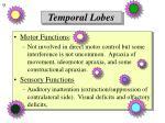 temporal lobes