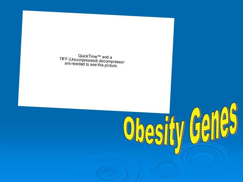 Obesity Genes