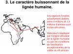 3 le caract re buissonnant de la lign e humaine21