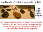 vu au mus e d histoire naturelle de lille
