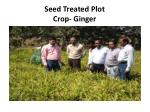 seed treated plot crop ginger