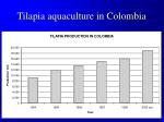 tilapia aquaculture in colombia