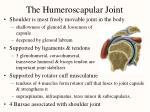 the humeroscapular joint