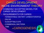 caries development niche environment theory