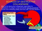 sources of destructive collagenase