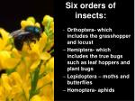 six orders of insects