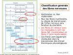 classification g n rale des fibres nerveuses