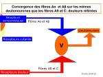 convergence des fibres a et a sur les m mes deutoneurones que les fibres a et c douleurs r f r es