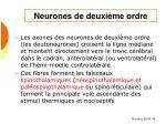 neurones de deuxi me ordre