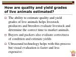 how are quality and yield grades of live animals estimated