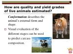 how are quality and yield grades of live animals estimated30