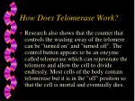 how does telomerase work19