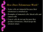 how does telomerase work20