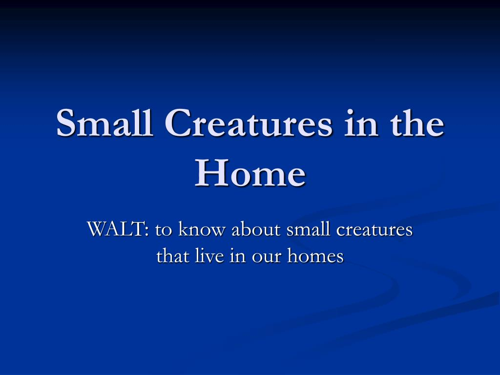 small creatures in the home l.