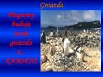 pingwiny buduj swoje gniazda z kamieni