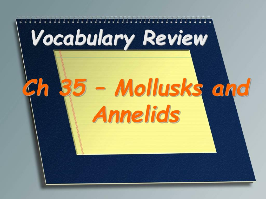 vocabulary review l.