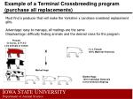 example of a terminal crossbreeding program purchase all replacements