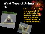 what type of animal is it