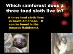 which rainforest does a three toed sloth live in